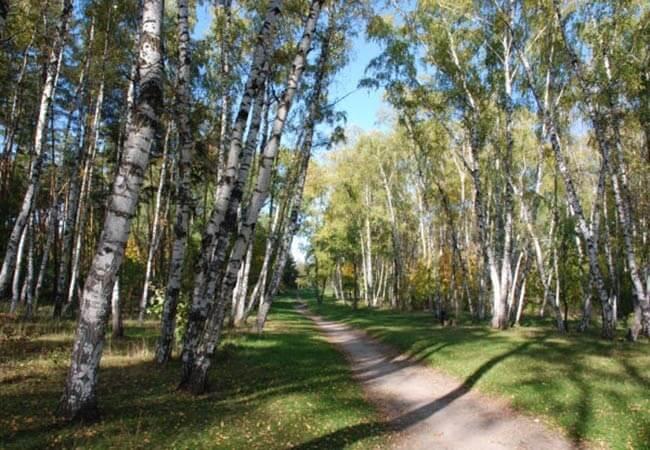 Березовый Гай Миргород Фото - Территория