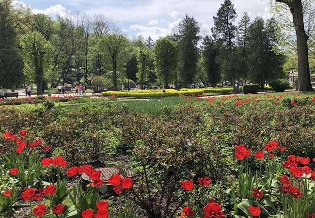 Цветы в Трускавце.