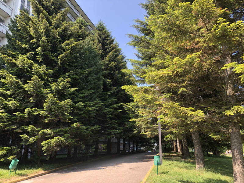 Санаторий Кристалл Трускавец Фото - деревья.