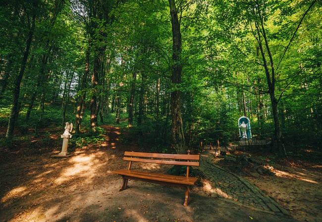 Санаторий Карпатия Шаян - лавочка в лесу.