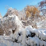 Санаторий Хрустальный Дворец Фото - деревья зимой