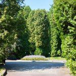 Санаторий Хрустальный Дворец Трускавец Фото - Деревья.