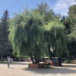Санаторий Моршинский Фото - дерево.