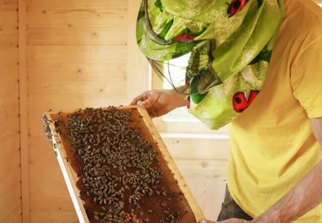 Отель Жаворонок Берегово - Пчёлы